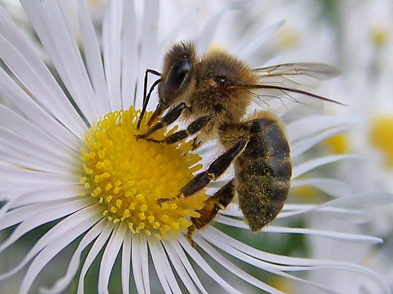 04 abejas