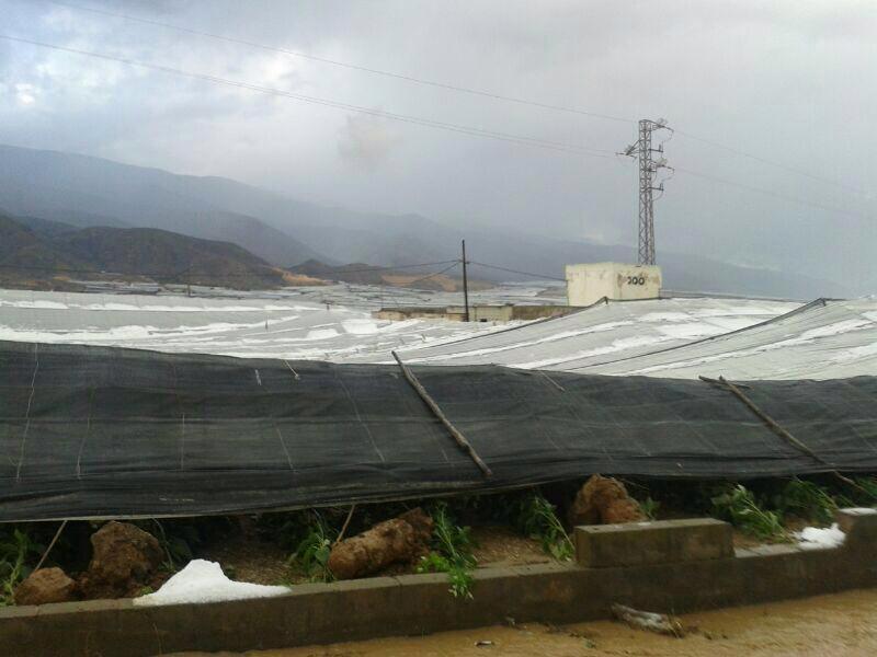 Almeria granizo-cultivos 2015