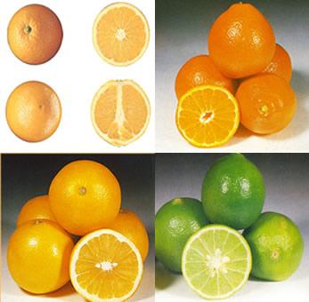 citricos54