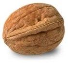 nuez fruto destacada 1