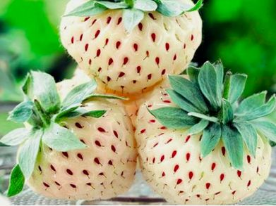 pineberry 1