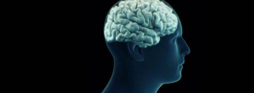 Revista destaca los ingredientes alimenticios indispensables para la salud del cerebro