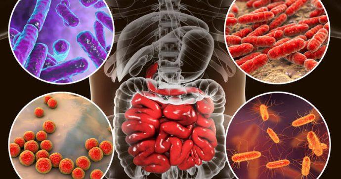Conozca los alimentos que ayudan a cuidar la microbiota