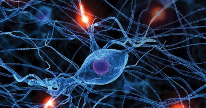 ¿Cómo funcionan las neurociencias de los antioxidantes?