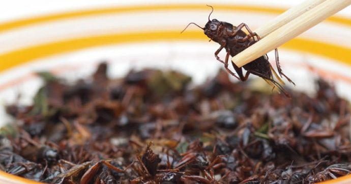 Portugal: aprueban comercialización de productos con proteínas derivadas de insectos