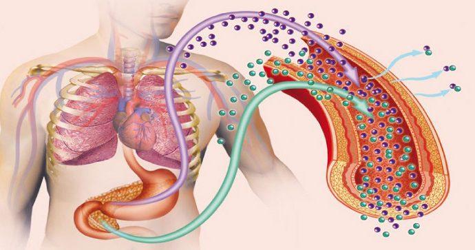Identifican potencial causa de la obesidad y la resistencia a la insulina